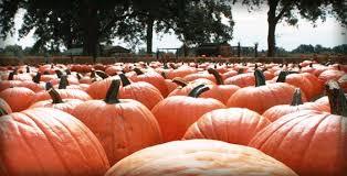 Motley Pumpkin Patch by Scott Arkansas Pumpkin Patch We Love Arkansas Pinterest