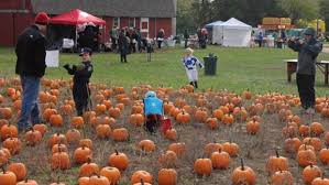 Pumpkin Patch Appleton Wi hilltop businesses sponsor annual pumpkin party hudson star observer
