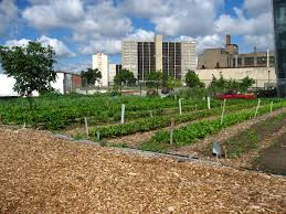 File North view of a Chicago urban garden Wikimedia mons