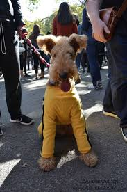 Tompkins Square Halloween Dog Parade by 171 Best Dogs U0026 Halloween Images On Pinterest Nyc The O U0027jays