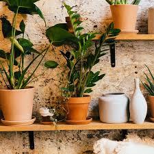 Como Adornar Mi Casa Con Plantas
