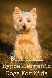 Non Shedding Hypoallergenic Dogs by The 25 Best Small Hypoallergenic Dogs Ideas On Pinterest Small