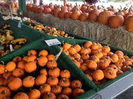 West Produce Pumpkin Patch Fayetteville Nc by Life With Army Wife 101 Krystel In Fayetteville Dollar Tree