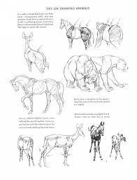 132 Best Animal Drawings Images On Pinterest