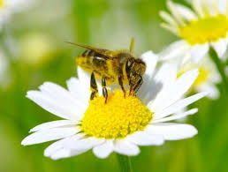 Attracting Insects To Your Garden by 20 Magical Ways To Make Your Garden A Wildlife Paradise