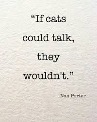 cat quotes best 25 cat quotes ideas on cat cat things and