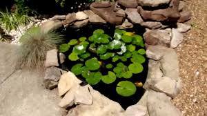 Easy Garden Pond No Pump Needed - YouTube Frog Lodge Gabe Feathers Mcgee The Whisper Folks How To Create A Wildlife Pond Hgtv Building Ogfriendly Build On Budget Youtube Backyard Home Landscapings Ideas Garden Diy Project Full Video To Make Chickadee Habitat Design And Build Wildlife Pond Saga For Frogs Part 5 Outdoor Patio Cute Round Koi Mixed With