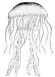 Jellyfish black and white clipart 2