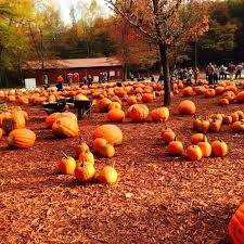 Pumpkin Farms In South Georgia by 12 Picture Perfect Fall Day Trips To Take In Georgia