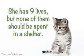 adopt a cat june is adopt a shelter cat month the everyday