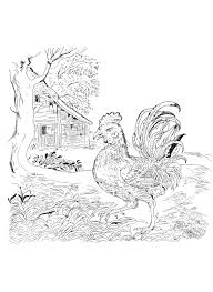 Coloring Book Lost Garden Cock By Pippa Rossi