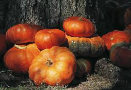 Sand Springs Pumpkin Patch by Five To Find The Area U0027s Best Pumpkin Patches Five To Find