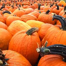 Swans Pumpkin Farm Hours by 5 Places For Pumpkin Pickin U0027 Perfection In The Charlottesville Area
