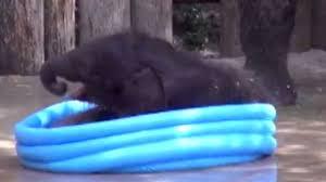 Cute Baby Elephant Pictures Belle Plays In Kiddie Pool Video