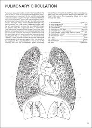 Proddtl Php Notes Brain Anatomy Coloring Book