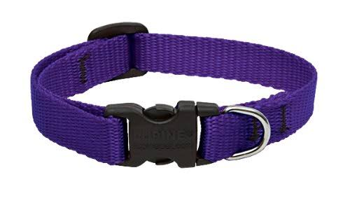 Lupine Pet Basics Adjustable Dog Collar - Purple, 1/2in Width, 10-16in Neck