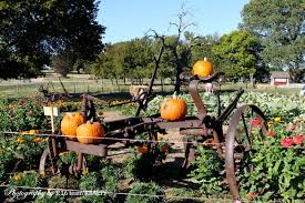 Pumpkin Farms In Southern Maryland by Katie U0027s Country Farm U0026 Pumpkin Patch In Aubrey Tx