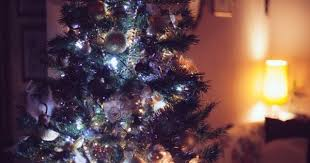 Sugar Or Aspirin For Christmas Tree by Does Adding Sugar Water To Christmas Trees Work Christmas