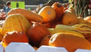 Pumpkin Patches Near Dallas Tx 2015 5 pumpkin patches you can u0027t miss this fall texas hill country