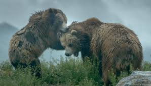 Cliparts Similar To Drawn Grizzly Bear California State 2173078
