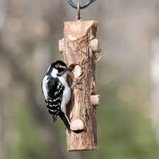 Songbird Essentials Cedar Suet Log Feeder for Woodpeckers