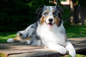 Best Guard Dogs That Dont Shed by 35 Best Medium Sized Dog Breeds List Of Popular Cute Medium