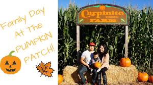 Denver Pumpkin Patch by Corn Mazes And Pumpkin Patches Near Seattle 2017 Axs