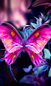 Hd Purple Butterfly Blackberry Wallpapers