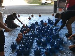 Lehner Pumpkin Farm by Blue Pumpkins To Benefit Lehner U0027s Family Wben 930am
