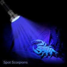 29 Lovely Bed Bug Uv Light Home Idea