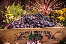 Knotts Berry Farm Halloween Hours by Win Tickets To The Boysenberry Festival At Knotts Berry Farm