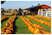 Pumpkin Patch Donnellson Iowa by Corn Maze In Donnellson Iowa Moonlight Maze Kathy U0027s Pumpkin