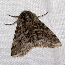 How To Get Rid Moths In Bedroom Closet