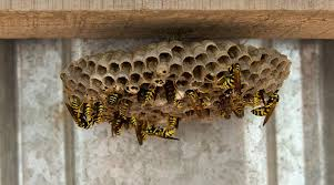 wasp nest removal removing a bees nest approved trader