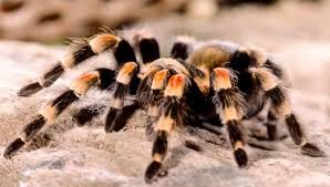 10 creepy things about spiders that will make you scream