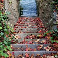 Automn Stairs Of Red Leaves Japan Hiroshima Automne Automn
