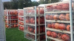 Old Westbury Gardens Dog Halloween by Halloween Pumpkins On Long Island From Zombos U0027 Closet