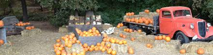 Central Wisconsin Pumpkin Patches by Hillcrest