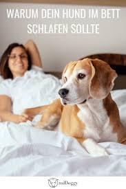 hier erfahrt ihr warum euer hund mit euch im bett schlafen