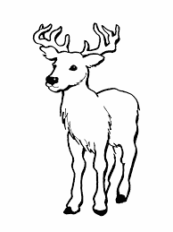 Free Printable Deer Coloring Sheets