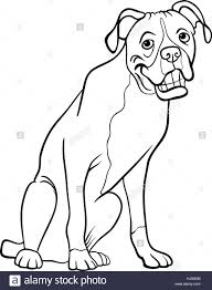 Black And White Cartoon Illustration Of Funny Boxer Purebred Dog For Coloring Book