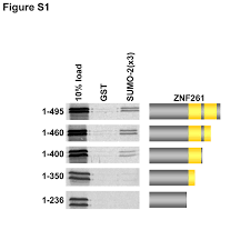Reliable Allele Detection Using SNPbased PCR Primers Containing