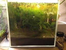 Petco Flower Ball Aquarium Decor by Pico Aquarium In A Mason Jar Almost Maintenance Free 9 Steps