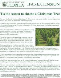 Balsam Christmas Trees Real by Christmas Trees