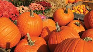 Pittsburgh Area Pumpkin Patches by Boston U0027s Best Pumpkin Patches Cbs Boston