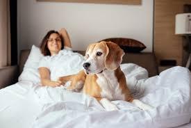 sollte ich meinen hund im bett schlafen lassen hundehaltung