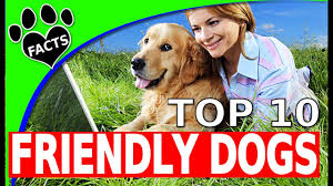 Top 10 Dogs That Dont Shed by Top 10 Friendliest Dog Breeds 10 Family Friendly Dogs 101 Animal