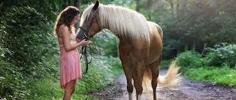 diy so machst du einen geburtstagskuchen für dein pferd