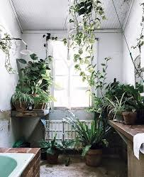 Best Pot Plant For Bathroom by Best 25 Jungle Bathroom Ideas On Pinterest Bathroom Plants