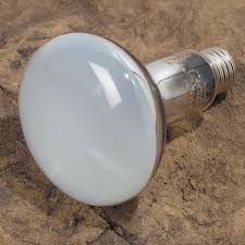Uvb Lamp Vitamin D3 by Reptile Lighting Uva Uvb Lighting Flood Lamps At Drs Foster U0026 Smith